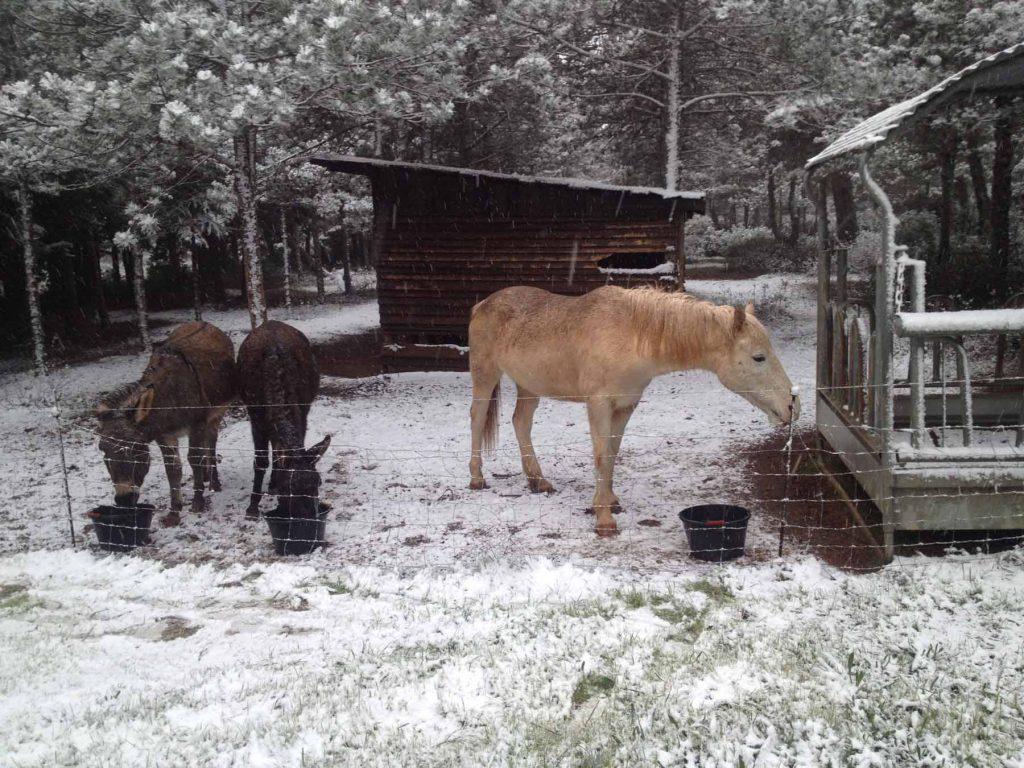 Les animaux de la ferme sous la neige