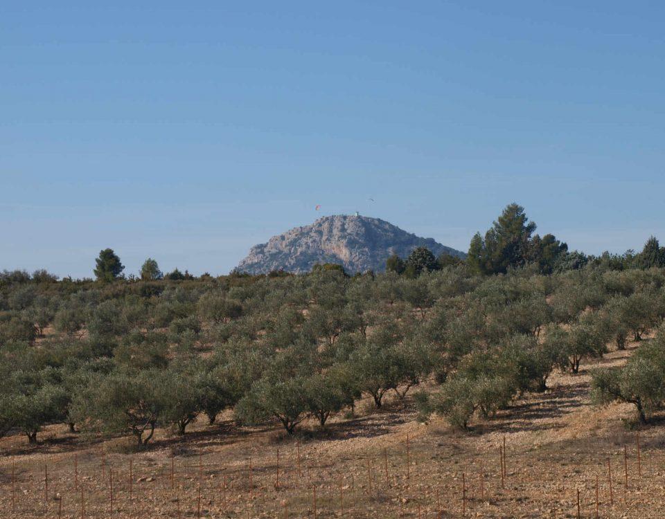Oliveraie du Clos Romain avec vue sur le Pic de Vissou