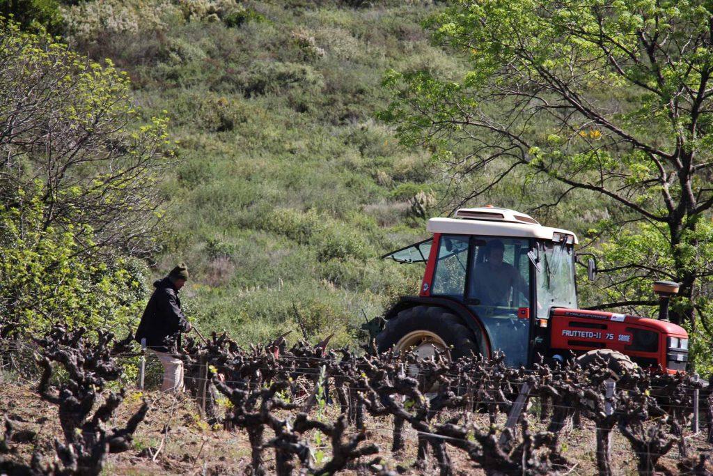 Travail de la vigne en tracteur
