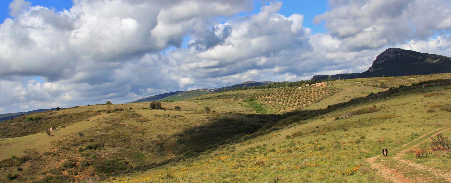 Paysage sur la garrigue et l'oliveraie du Clos Romain